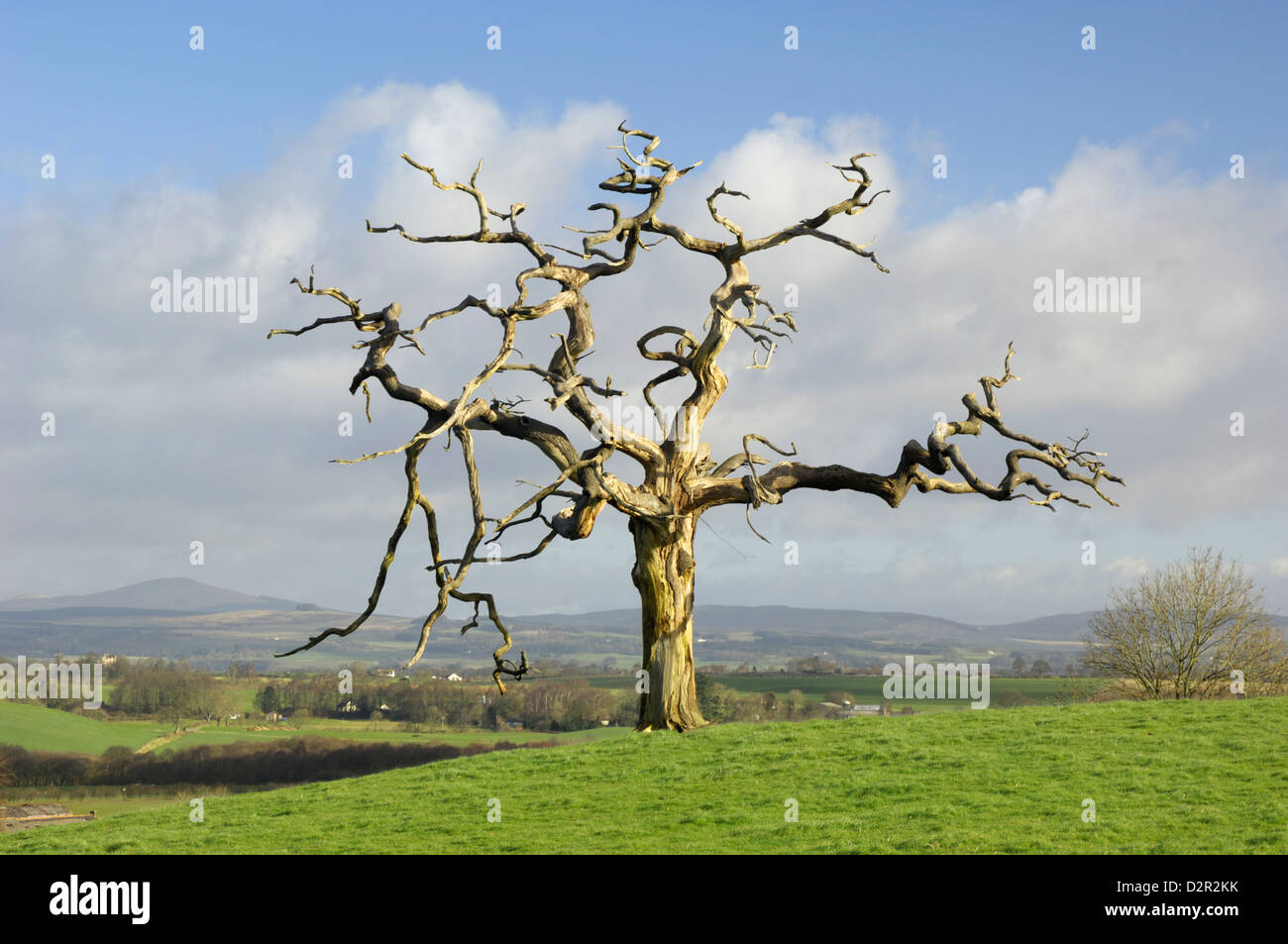 A dead tree forms graphic shapes, United Kingdom, Europe Stock Photo