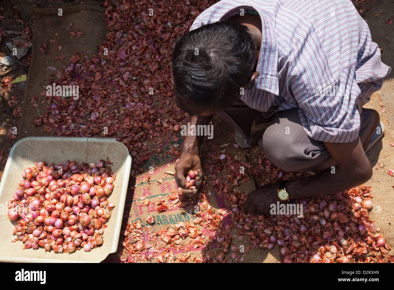 Onion seller sorting his stock on the street in Munnar, Kerala, India, Asia - Stock Image