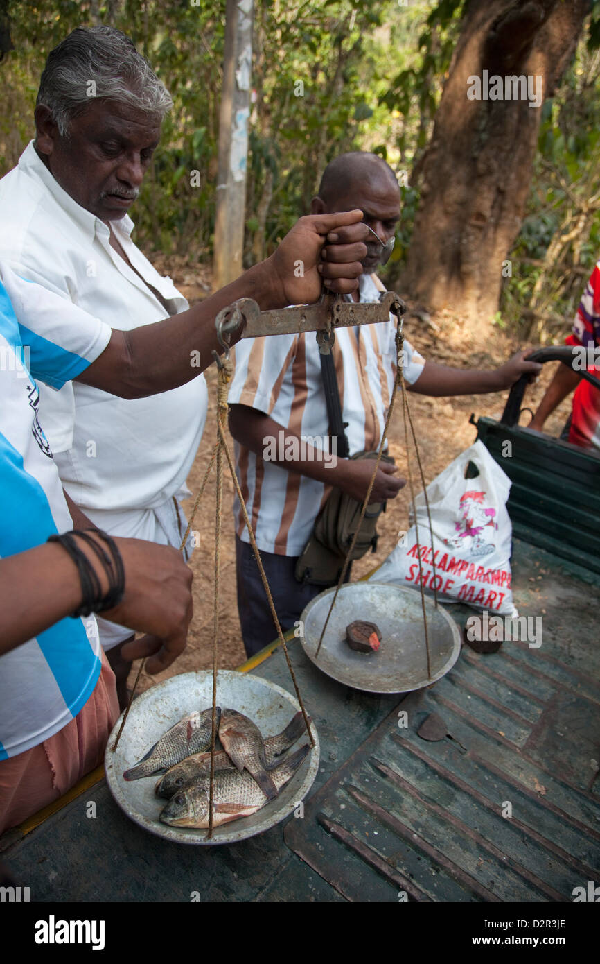Mobile fishmonger weighing fish in Periyar, Kerala, India, Asia - Stock Image