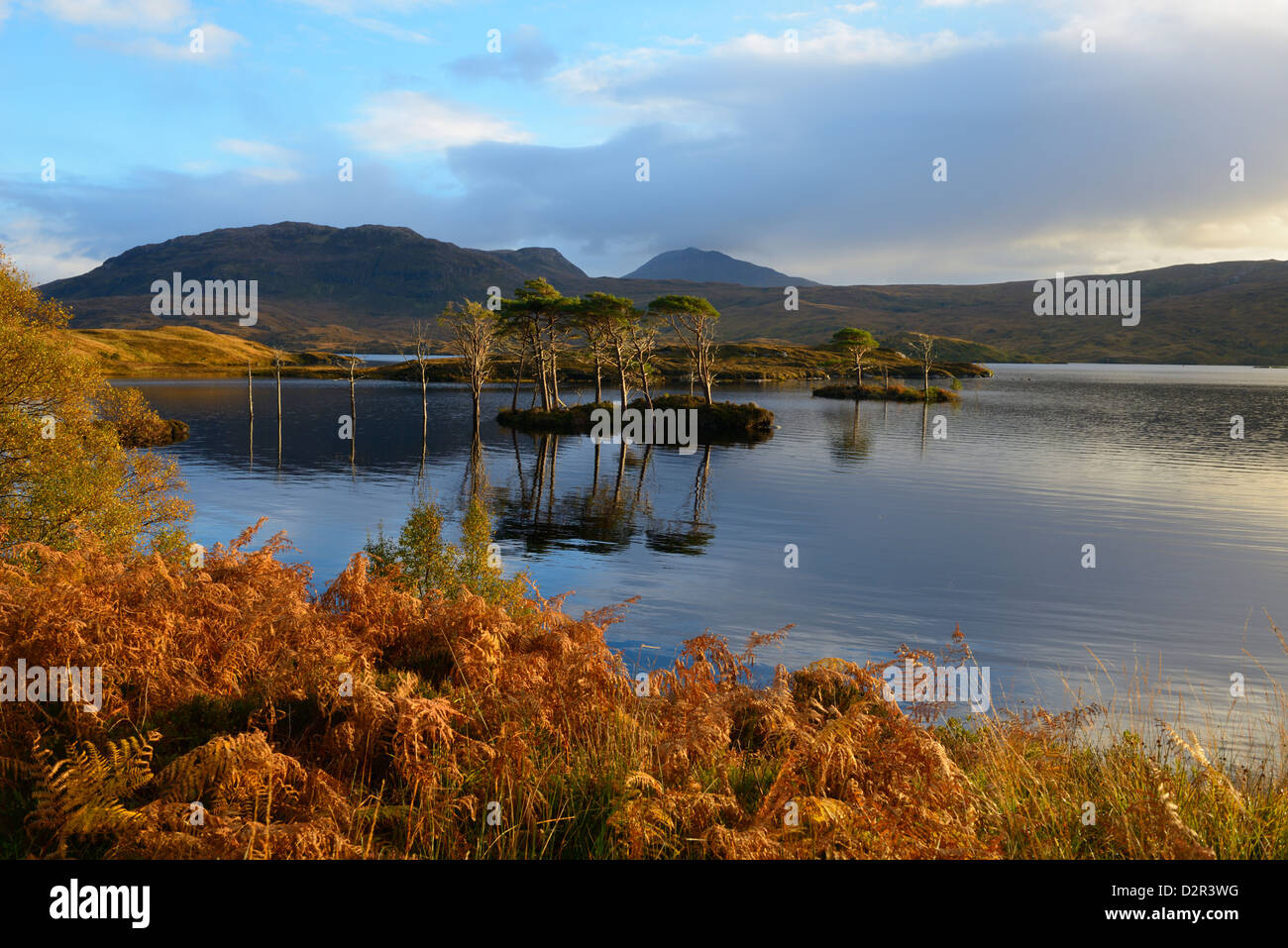 Evening sunlight, Loch Assynt, National Nature Reserve, Sutherland, Highlands, Scotland, United Kingdom, Europe - Stock Image