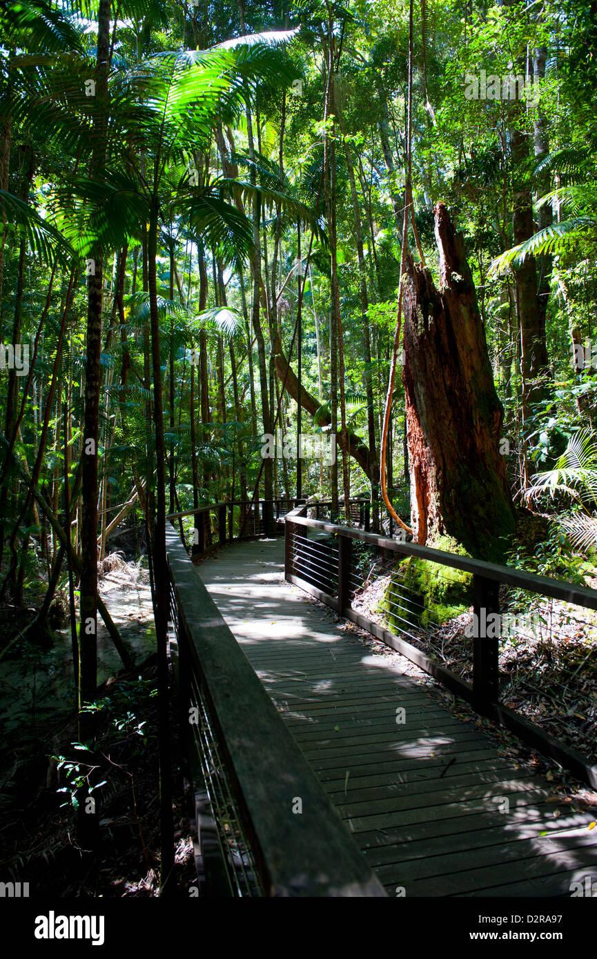 Tropical trees on Fraser Island, UNESCO World Heritage Site, Queensland, Australia, Pacific - Stock Image