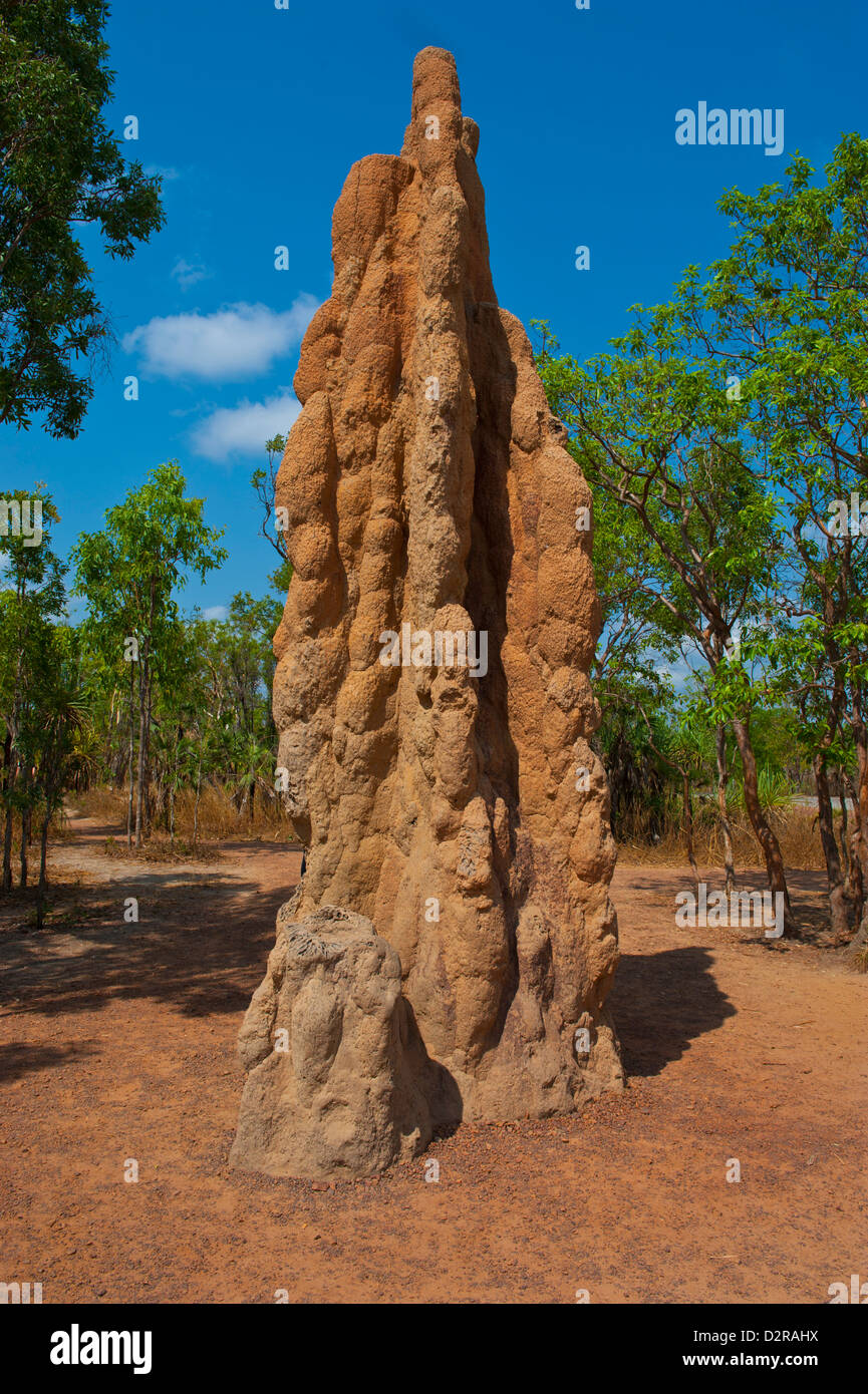 Termite mound in the Litchfield National Park, Northern Territory, Australia, Pacific - Stock Image