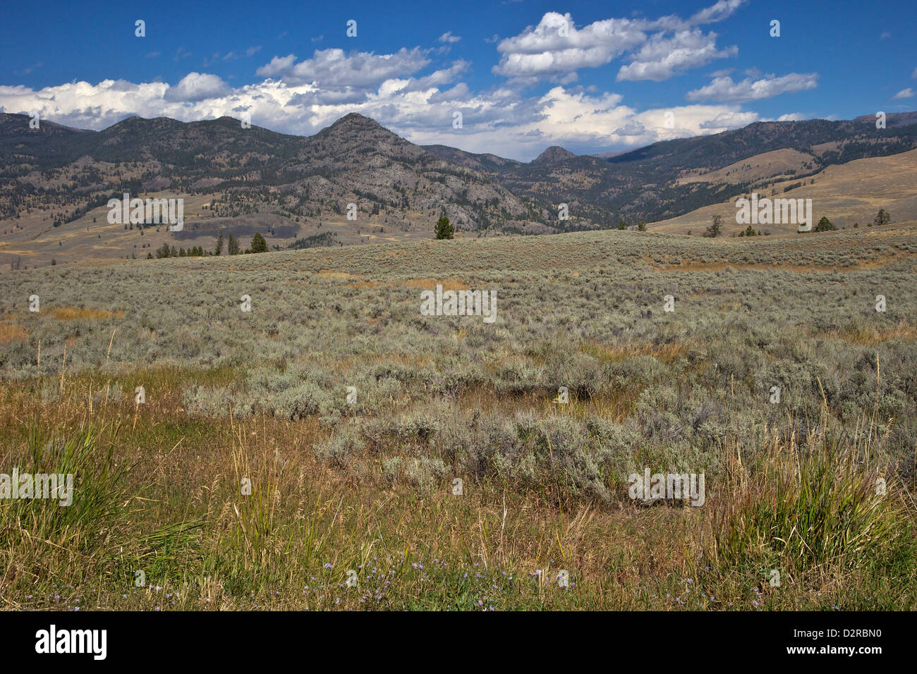 Landscape in Northern Yellowstone from Grand Loop Road, Yellowstone National Park, Wyoming, USA - Stock Image