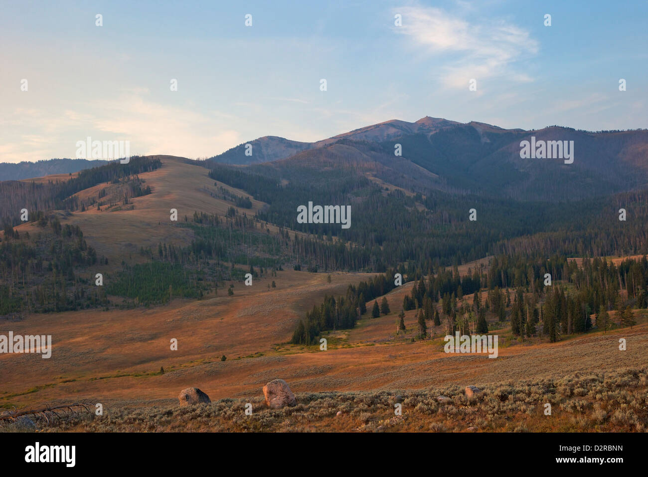 Mount Washburn in early morning light, Yellowstone National Park, Wyoming, USA - Stock Image