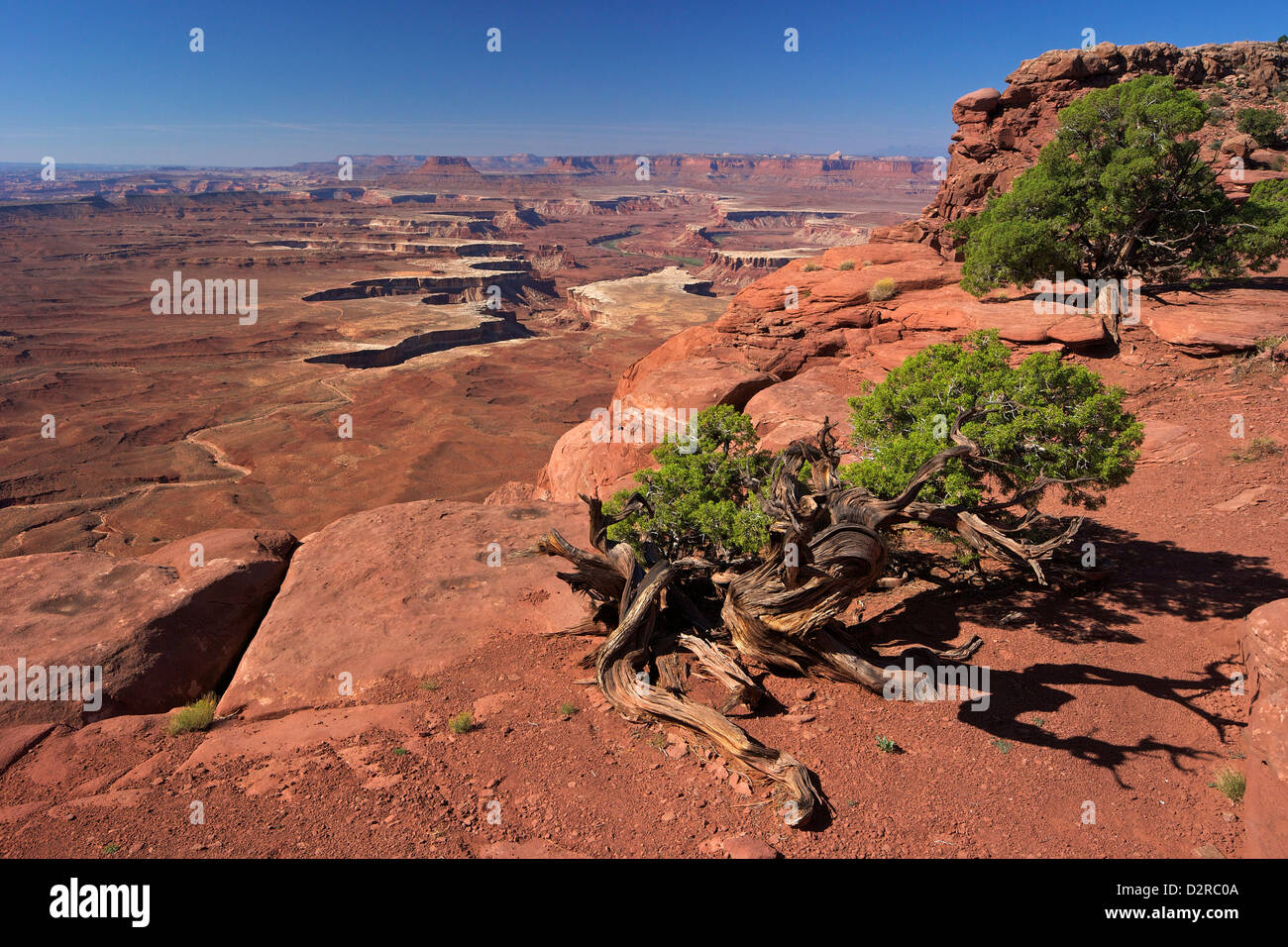 Green River Overlook, Canyonlands National Park, Utah, United States of America, North America - Stock Image