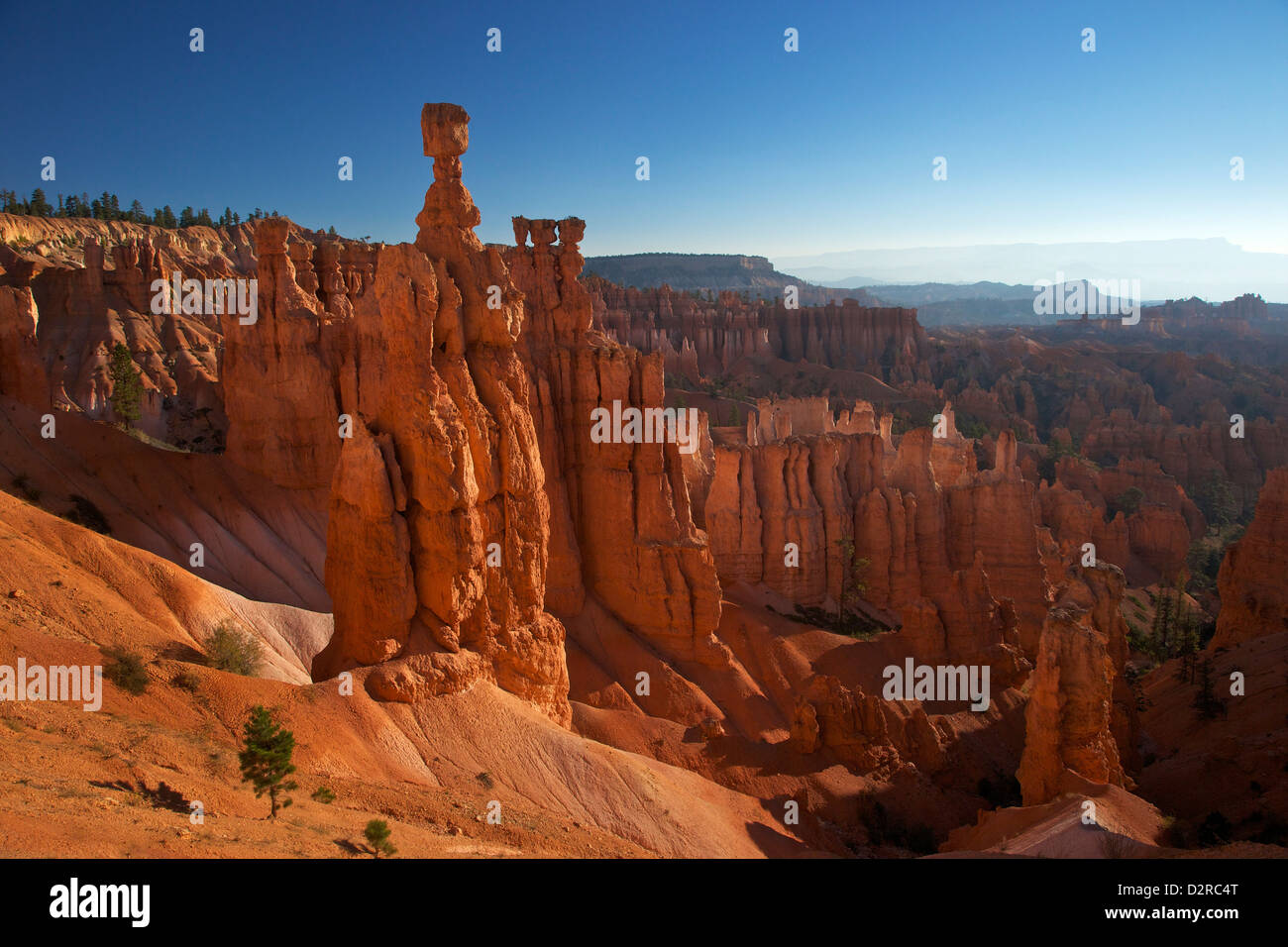 Thor's Hammer in early morning from Sunset Point, Bryce Canyon National Park, Utah, United States of America, - Stock Image