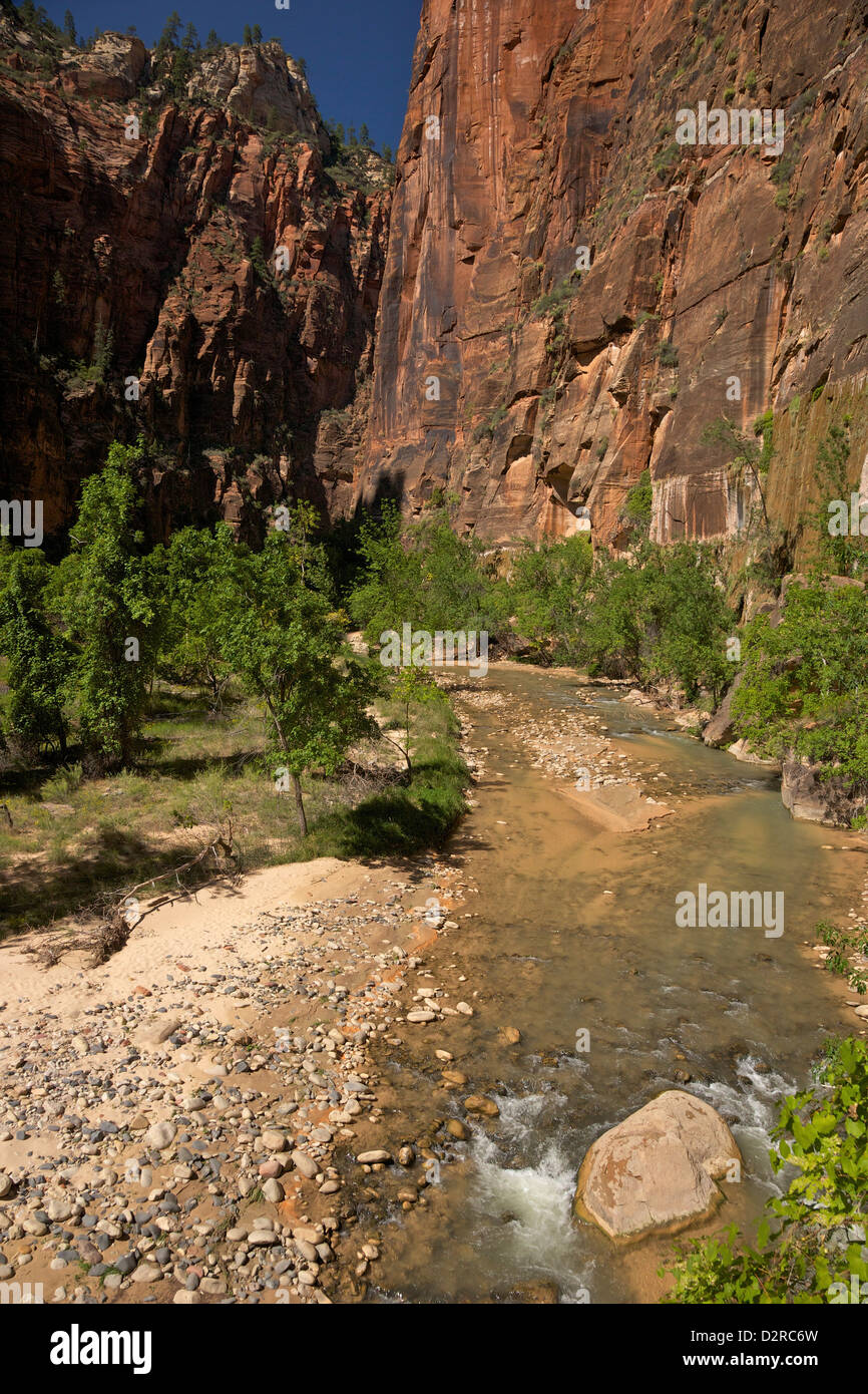 Riverside Walk in Virgin River Canyon, north of Temple of Sinawava, Zion National Park, Utah, USA - Stock Image