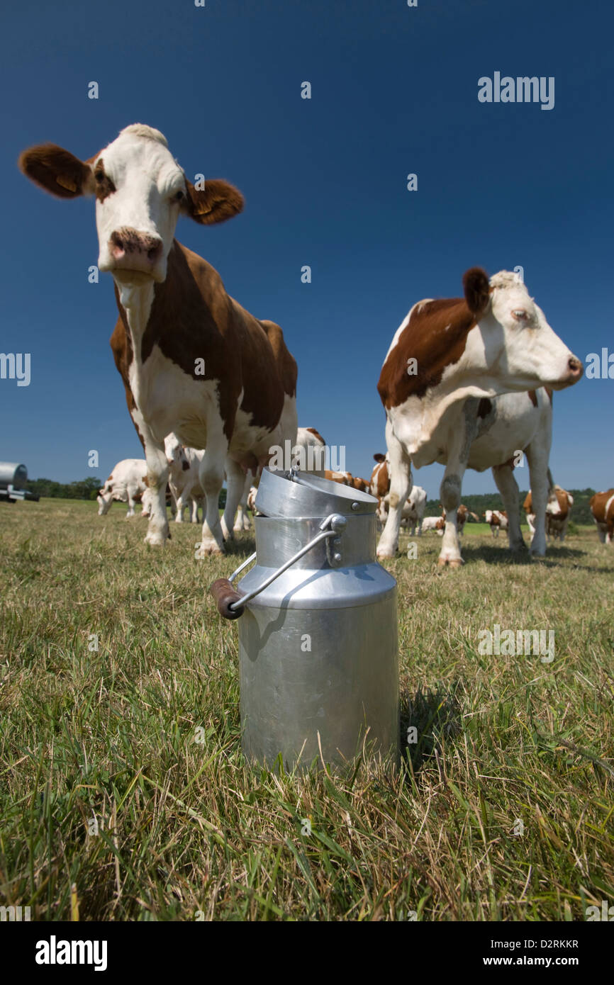 MILK CHURN IN ALPINE PASTURE WITH CATTLE CANTAL AUVERGNE FRANCE Stock Photo