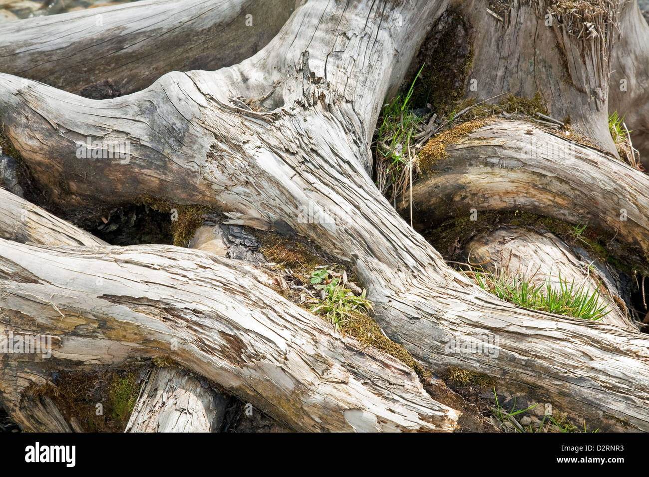 Old Tree Stock Photos Amp Old Tree Stock Images Alamy