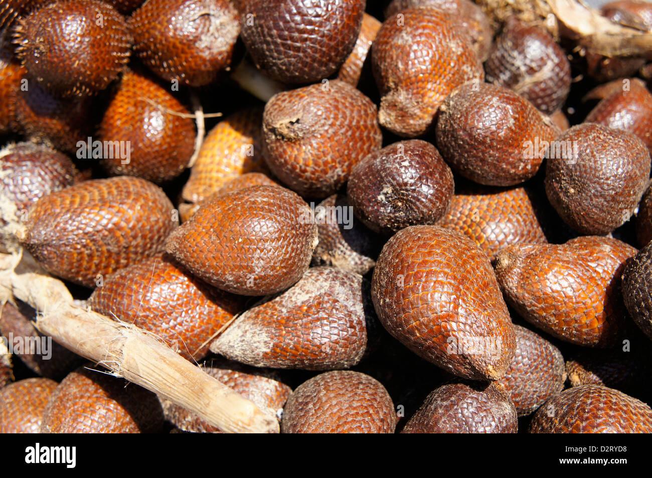 Salak (Salacca zalacca) , snake fruit - Stock Image