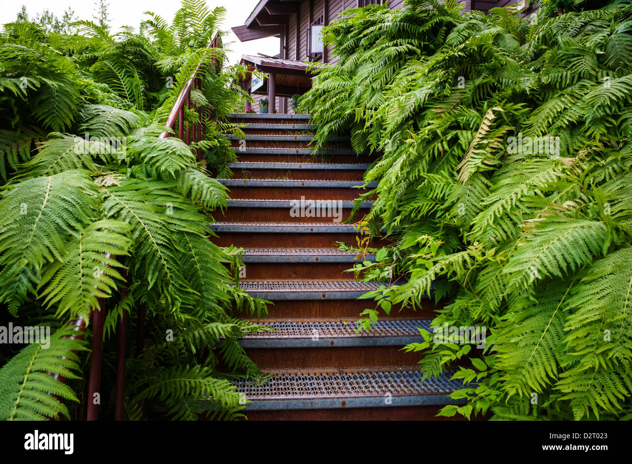 Stairs overgreen with lush green garden ferns, summer view of Aleyaska Resort & Ski Area, Aleyaska, Alaska, - Stock Image