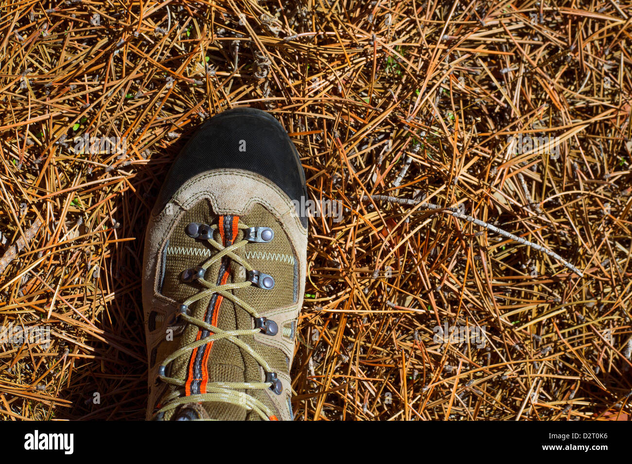 Hicker explorer feet boot detail on pine dried needles at mountain - Stock Image