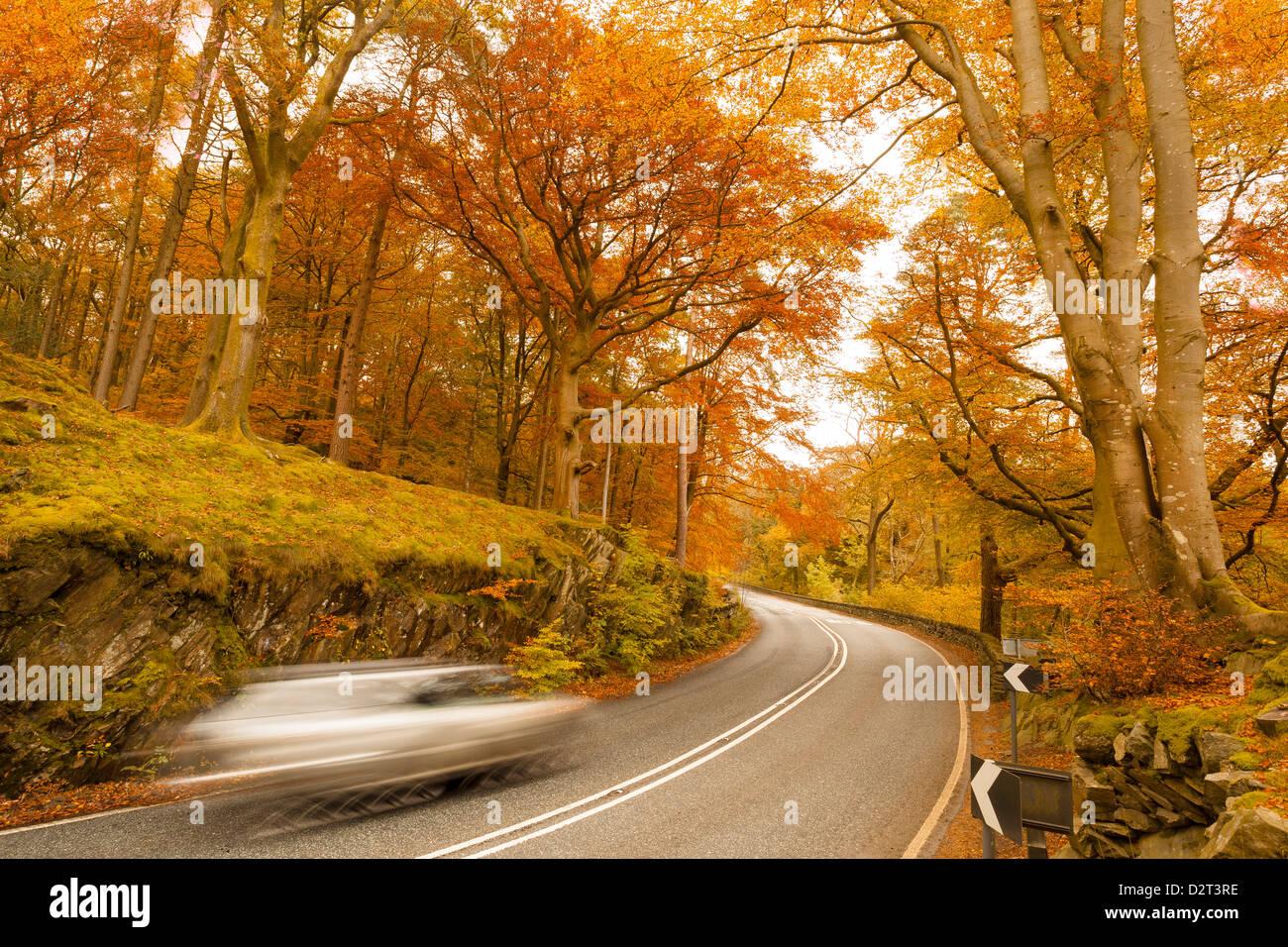 Car speeding through autumn forest road, Lake District National Park, Cumbria, England, United Kingdom, Europe - Stock Image