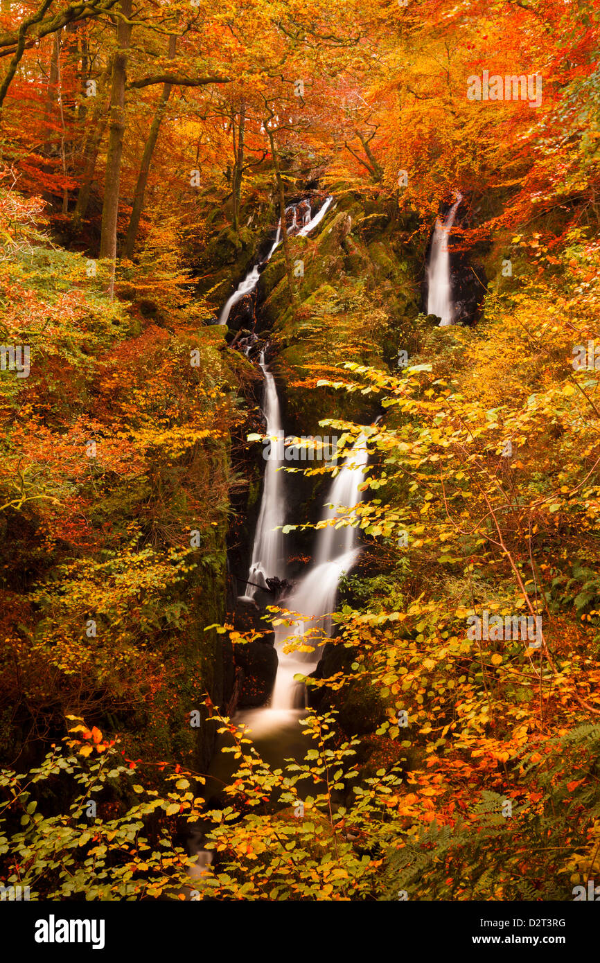 Stock Ghyll Force Waterfall in autumn, Lake District National Park, Cumbria, England, United Kingdom, Europe - Stock Image