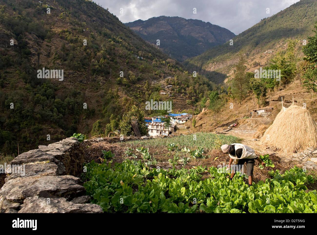 Tikhedhunga Village, Annapurna Himal, Nepal, Himalayas, Asia - Stock Image