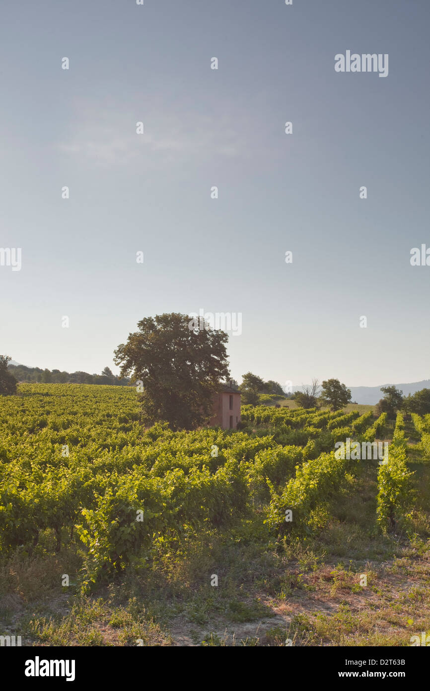 An old house amongst vineyards near to Apt, Vaucluse, Provence, France, Europe - Stock Image