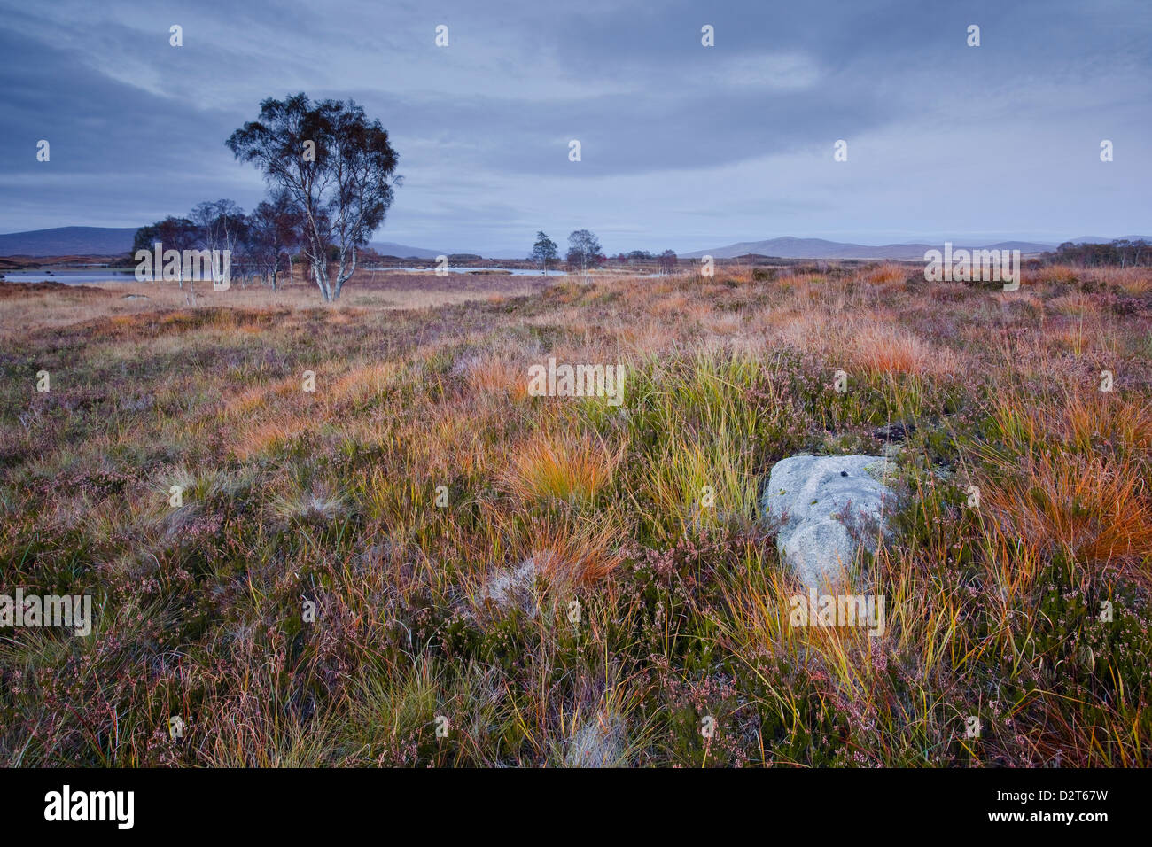 The area of Rannoch Moor, a Site of Special Scientific Interest, Highlands, Scotland, United Kingdom, Europe - Stock Image
