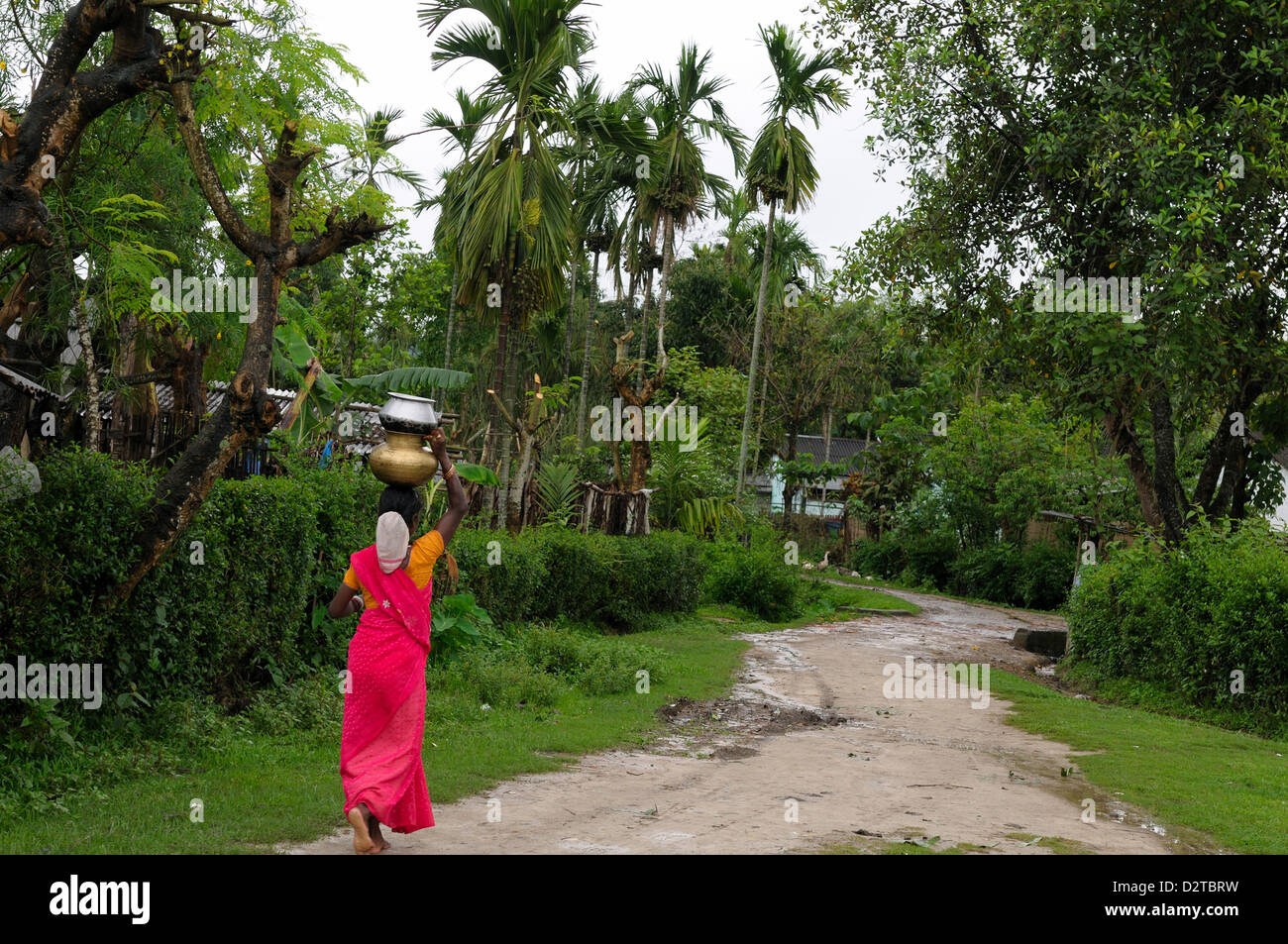 Woman carrying water, Assam, India, Asia - Stock Image