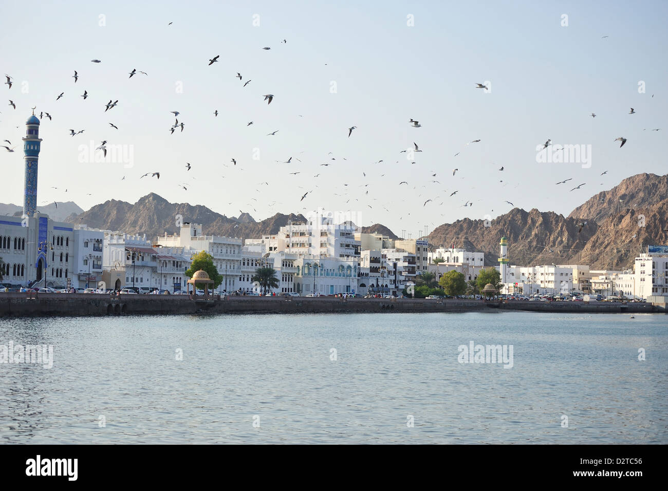 A flock of seagulls with stark mountains and the Corniche in the background; Mutrah; Muscat, Oman. - Stock Image