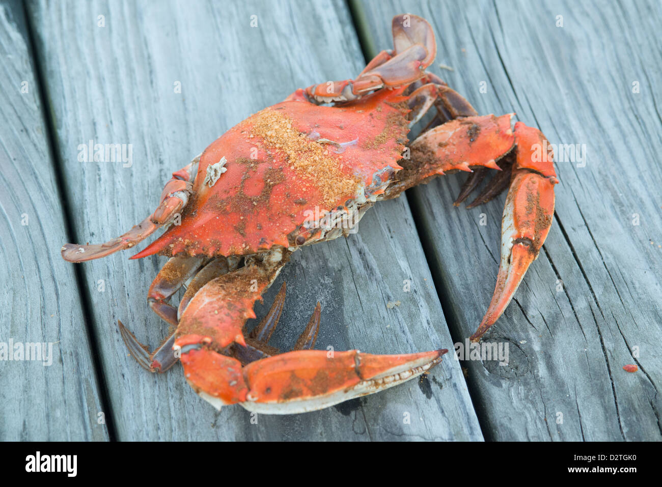 Steamed crabs with Old Bay seasoning on a pier by the shoreline - Stock Image