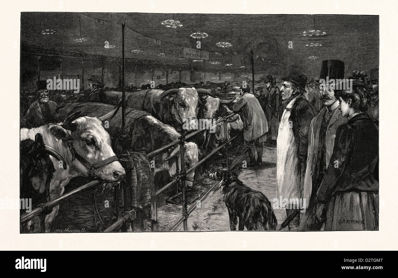 THE SMITHFIELD CLUB CATTLE SHOW AT THE AGRICULTURAL HALL - Stock Image