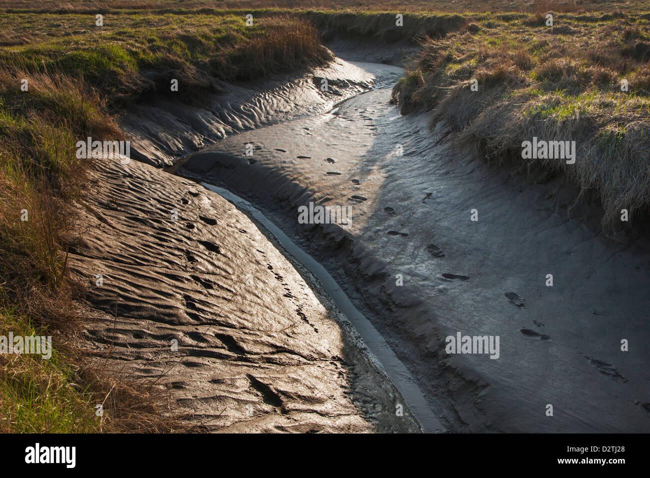 Tidal mudflat at salt marsh in the Verdronken Land van Saeftinghe, estuary of the Western Scheldt in Belgium / the Stock Photo