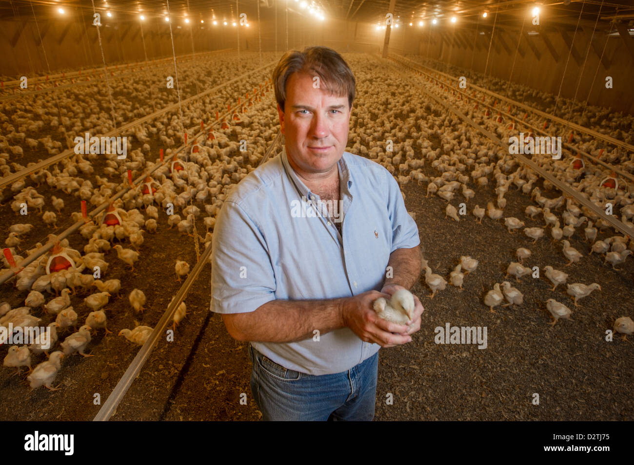 Maryland poultry farmer - Stock Image