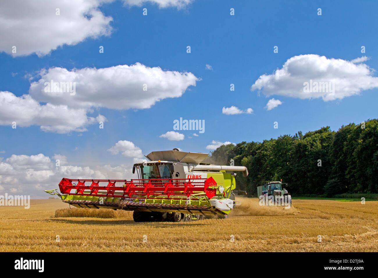 Farmer in combine harvester harvesting cereals on cornfield / wheat field of farmland in summer - Stock Image