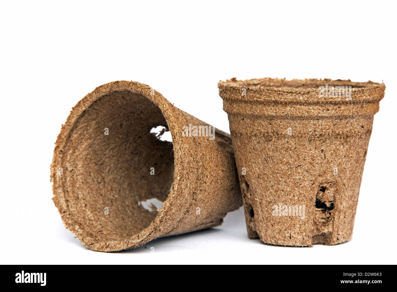 Peat pots for seedlings - Stock Image