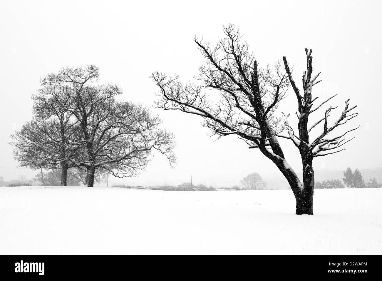 Black and white landscape: Trees in snow, Chislehurst, Kent UK - Stock Image