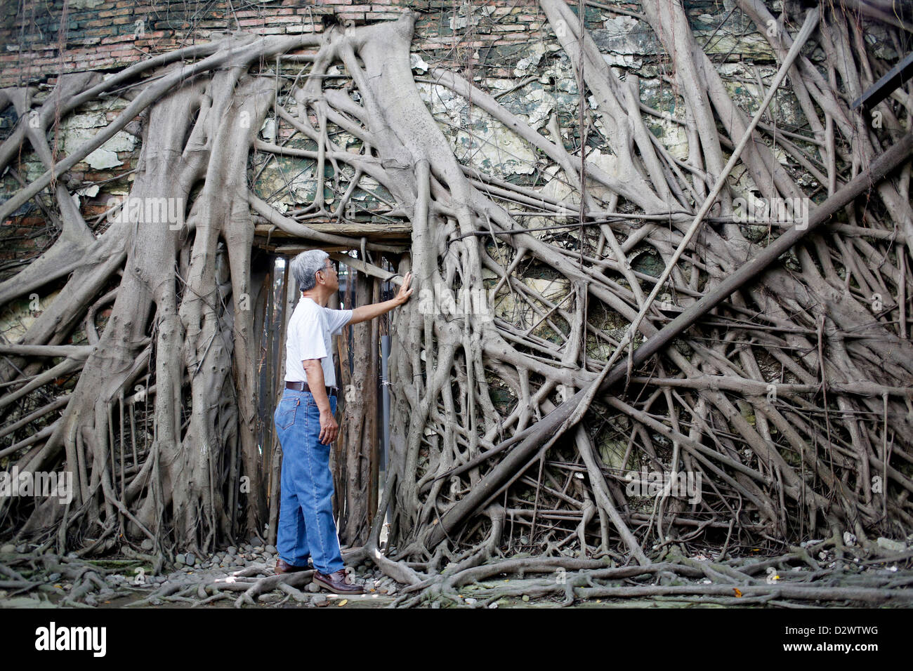 Banyan tree roots surround a Dutch colonial warehouse, known as the 'Banyan House,' in Anping, Taiwan - Stock Image