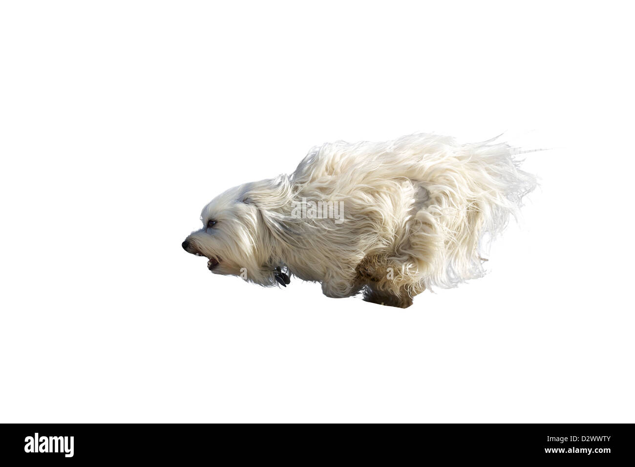 An exempted dog is running at full speed across the screen - Stock Image
