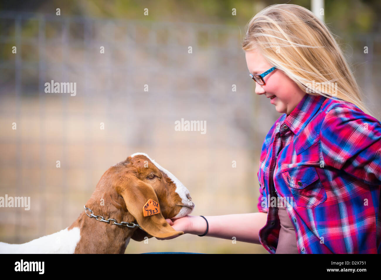 Girl and Goat - Stock Image