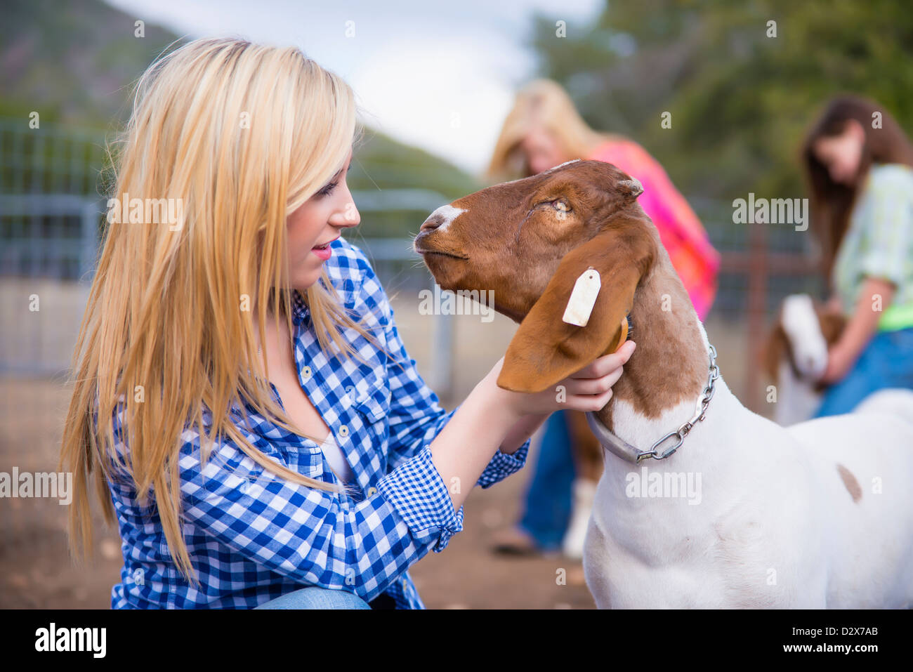 Children on livestock farm taking care of animals - Stock Image