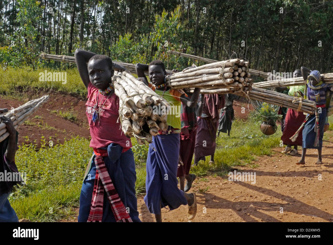 ethiopia road between chagni debate beni shangul gumuz region girls carrying poles for house construction Stock Photo