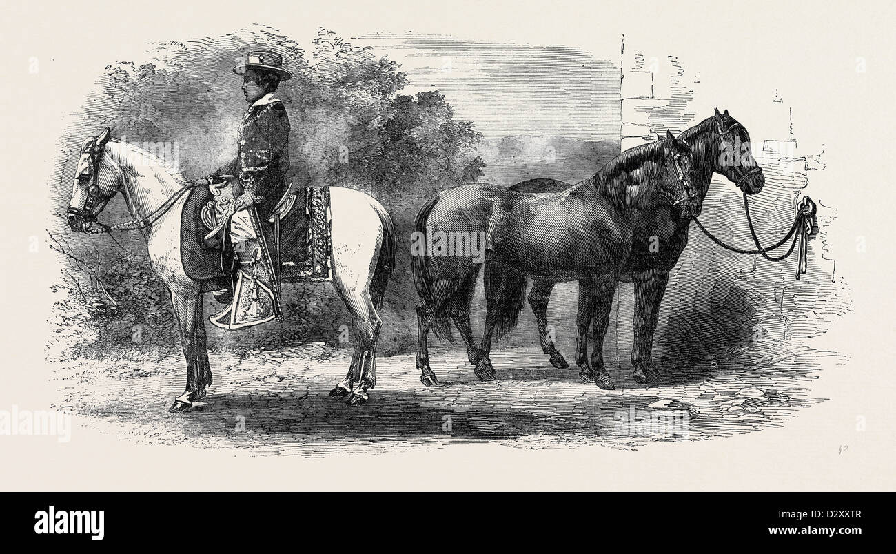 MEXICAN PONIES PRESENTED TO THE PRINCE OF WALES. - Stock Image