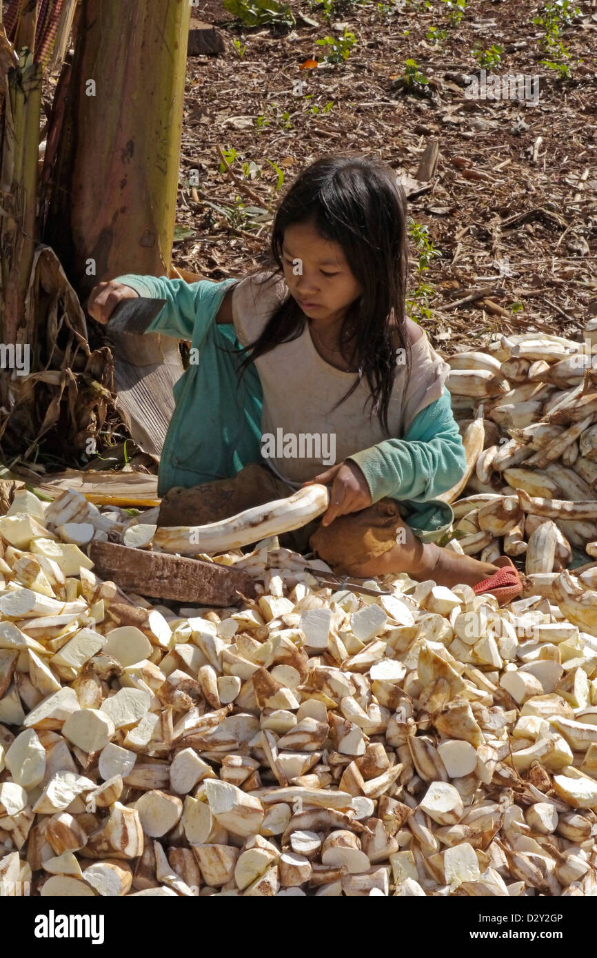 cambodia photography by projects caritas funded sciaf puchrey chang village commune villagers preparing dried - Stock Image