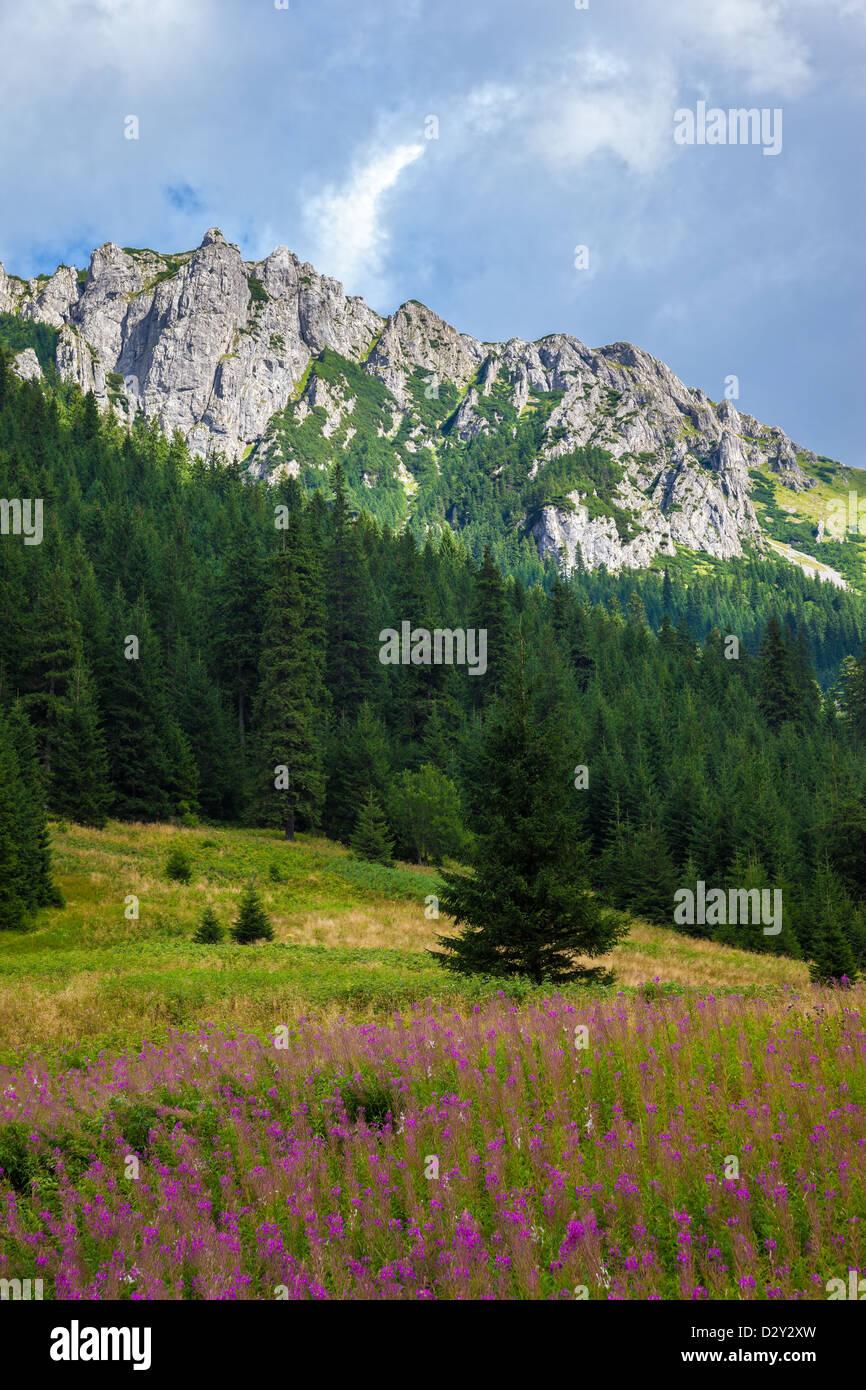 Summer view of the Tatra Mountains, Poland. Stock Photo