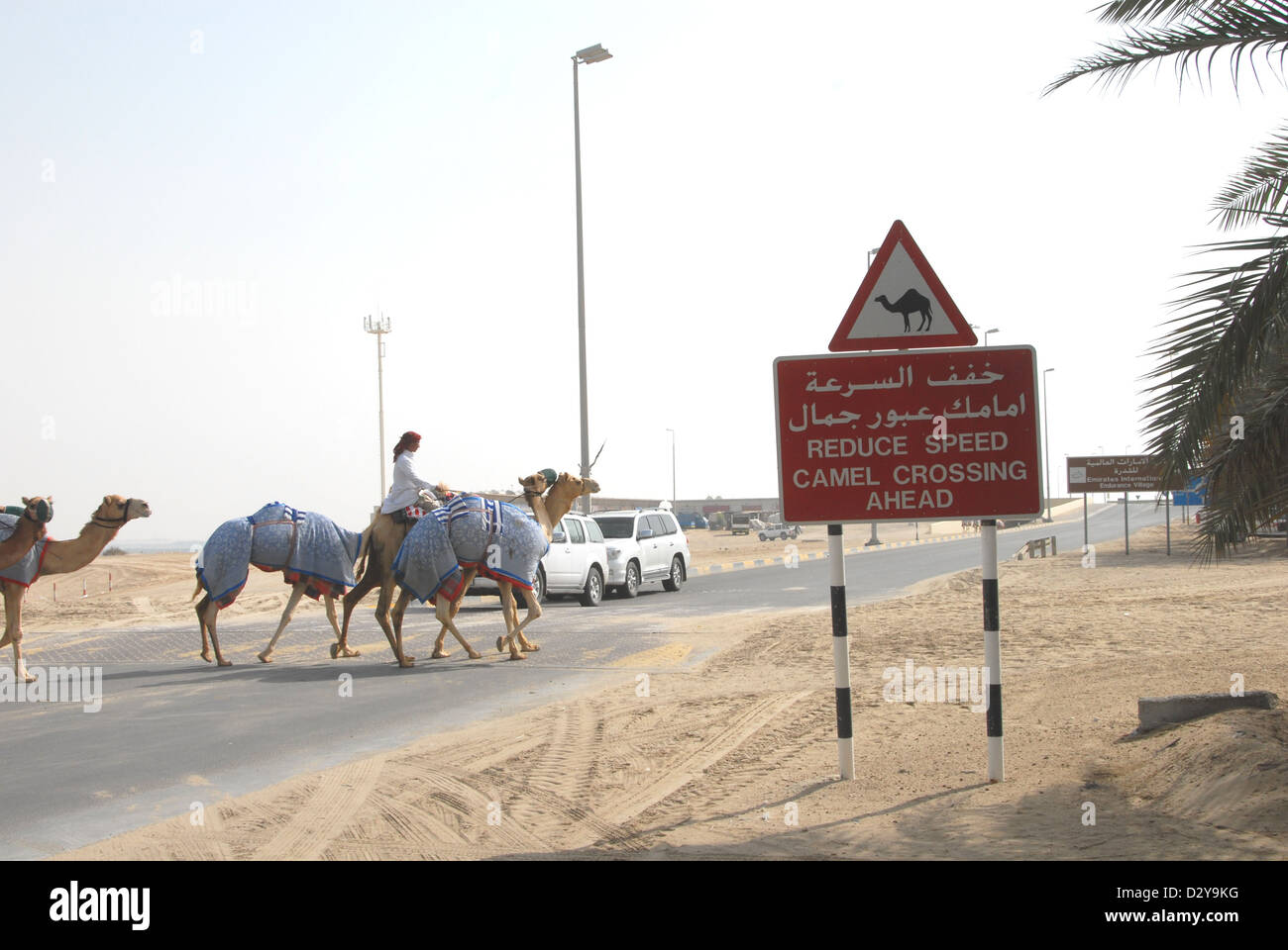 A camel crossing point on a road at the International Endurance Village near Abu Dhabi Stock Photo
