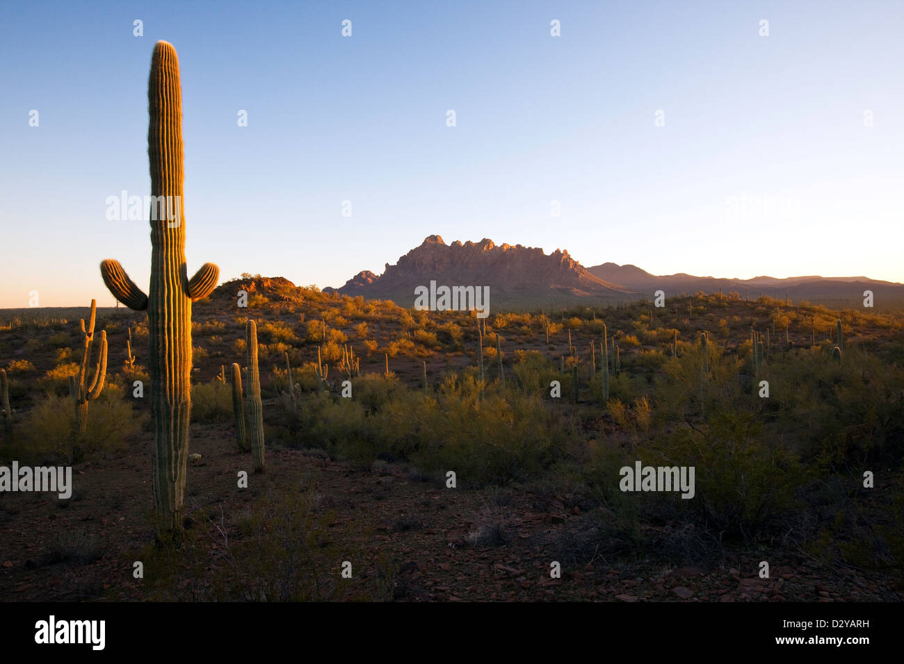 Ironwood National Monument, Ragged Top Mountain in the distance, Arizona - Stock Image