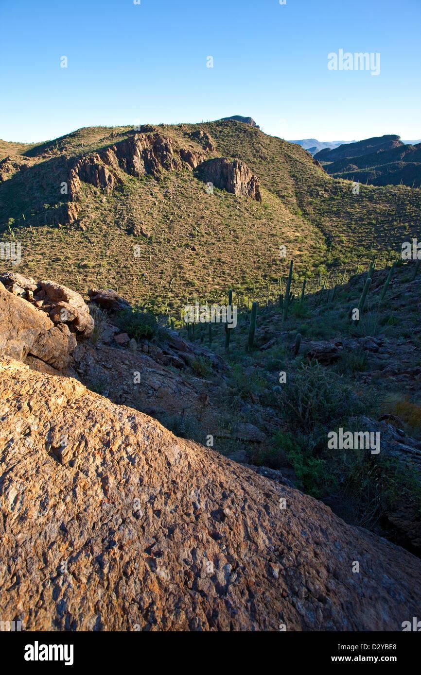 Tucson Mountains, Saguaro National Park West, Tucson, Arizona - Stock Image