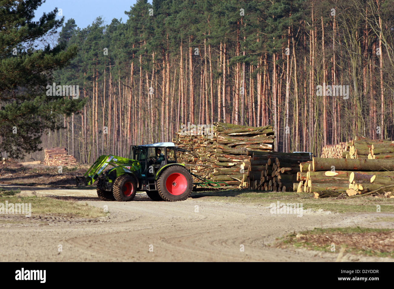 New Hagen, Germany, in front of tractor stacked Baumstaemmen - Stock Image