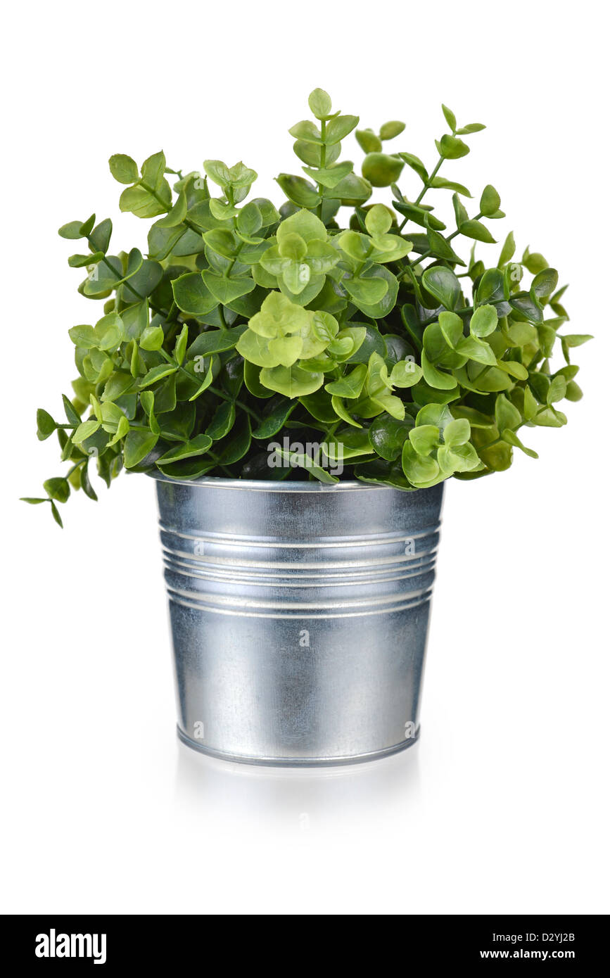 Pot Plant, Plant in Metal Tin Pot, artificial Potted Plant - Stock Image