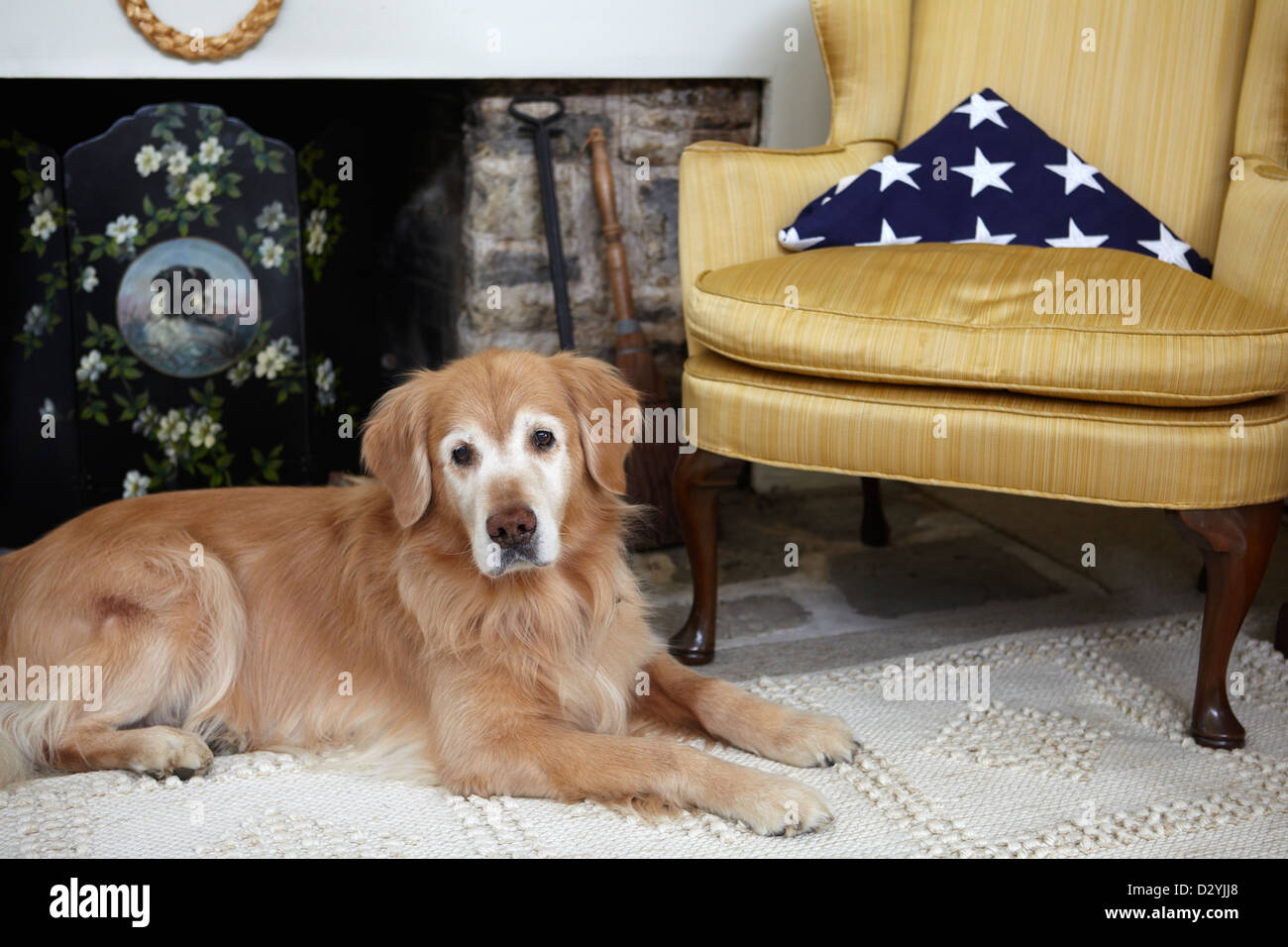 Loyal Golden Retriever dog with deceased Veteran, American flag. - Stock Image