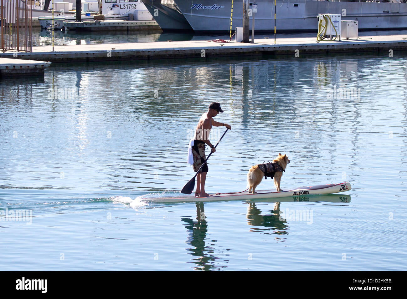 Man paddling a SUP (stand up and paddle) with his dog on the front in Dana point marina southern California - Stock Image