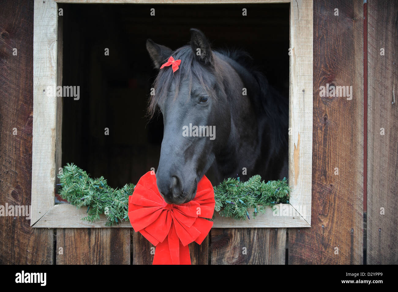 horse looking out a barn window with christmas decorations
