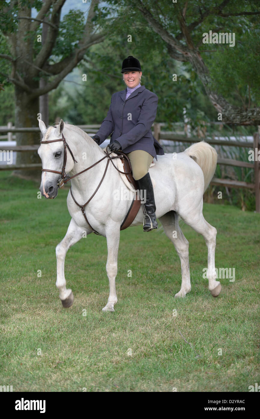 Woman in English riding clothes riding white purebred Arabian stallion. - Stock Image