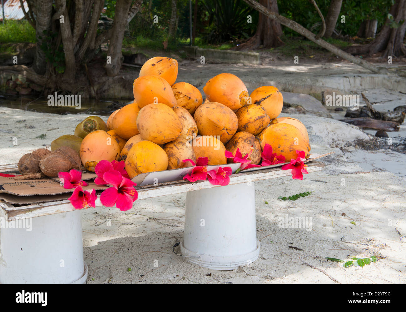 Coconut Flower Stock Photos Coconut Flower Stock Images Alamy