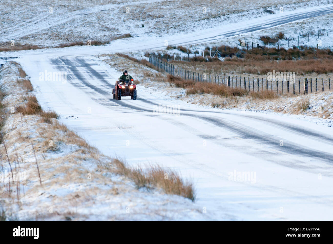 Cambrian Mountains, Wales, UK. 5th February, 2013. A hefted sheep farmer arrives on a quad bike to feed his ewes Stock Photo