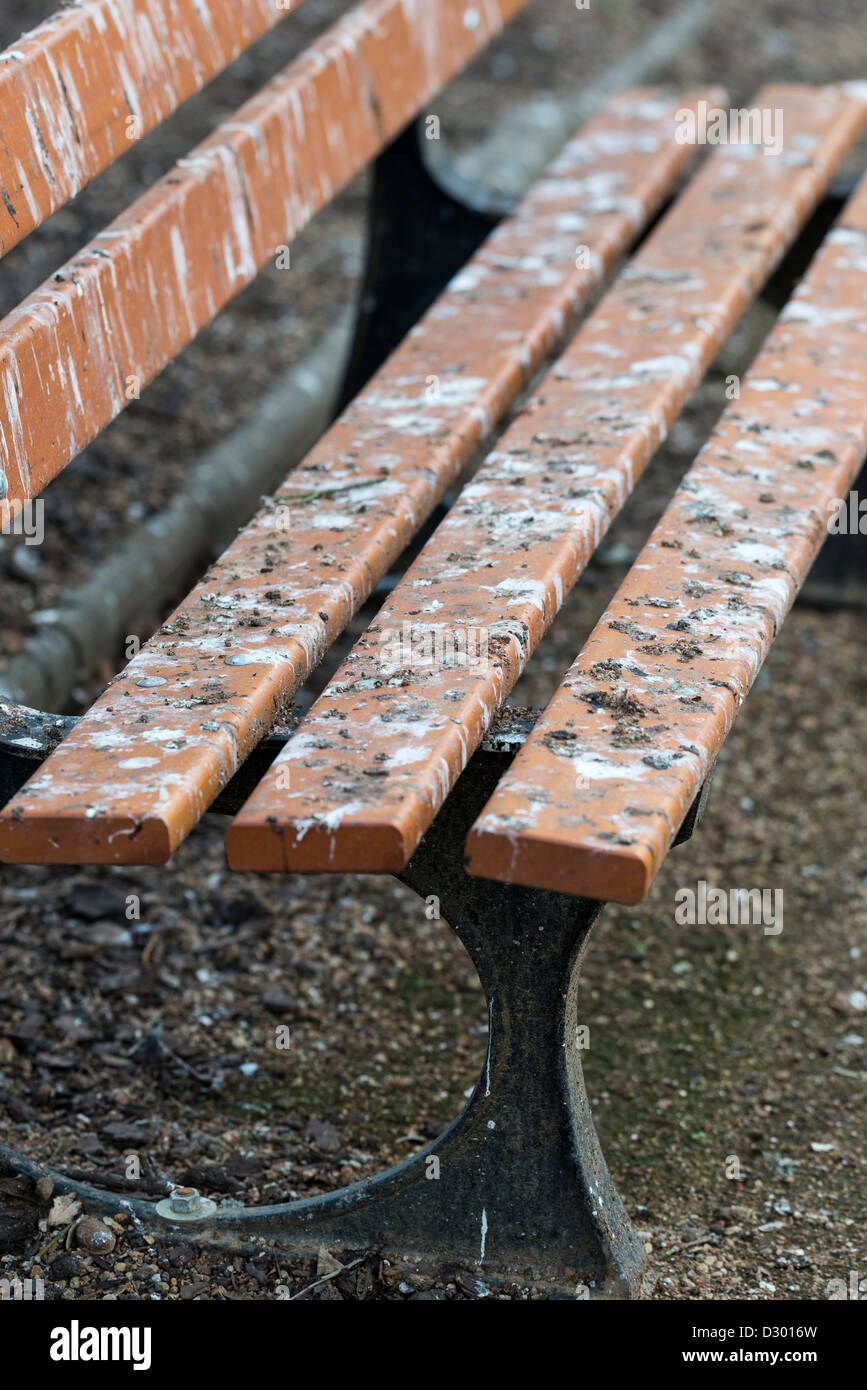 Bird droppings on bench - Stock Image